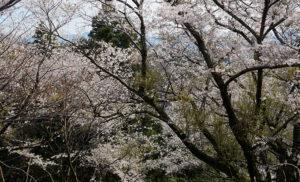 諸上寺公園003